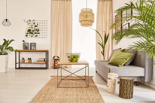 Les plantes dépollunates pour une maison saine