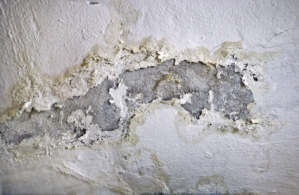 Pas de champignons dans une maison saine