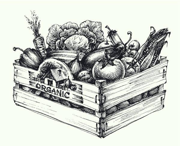 Origine de l'alimentation bio