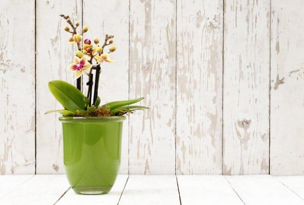 7 astuces naturelles ou Bio pour se débarrasser de l'humidité dans la maison