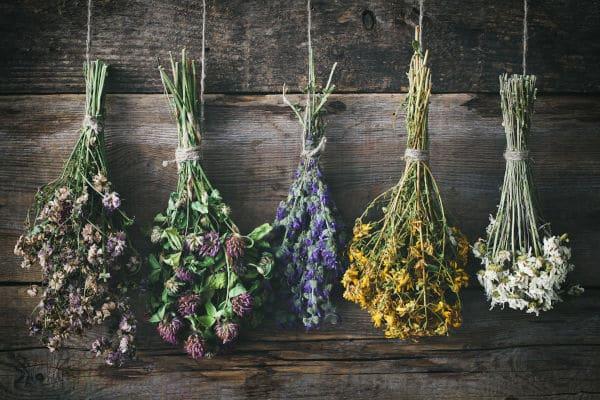 fleurs séchées et décoration d'intérieur